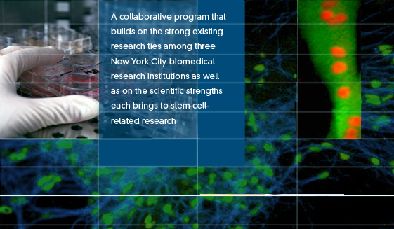 A collaborative program that builds on the strong existing research ties among three New York City biomedical research institutions as well as on the scientific strengths each brings to stem-cell-related research